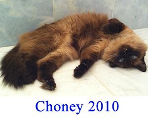 choney-2010